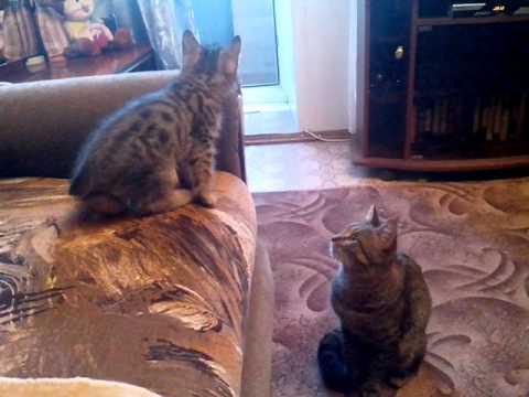 интим знакомства Кошки