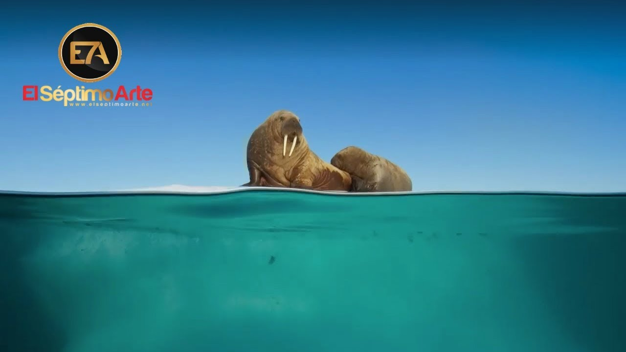 10 documentales maravillosos con los que puedes aprender sobre fauna en esta cuarentena