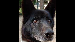 "When I say ""Migi-mawari"", my dog turns to the right."
