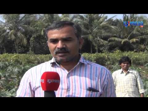 Success story of French Beans farming by Rammohan Rao - Express TV