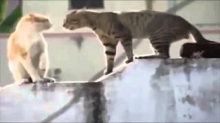 Коты дают жару прикол!