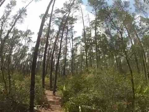 Ocala National Forest (The Florida Trail)