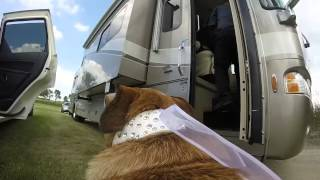 Awesome wedding video through our dogs eyes