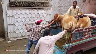 cow unload in 2017