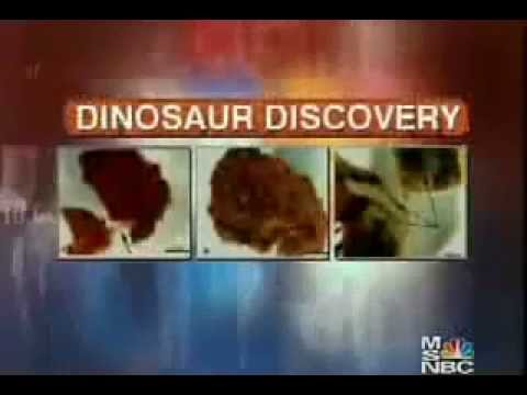 Dr. Mary Schweitzer on T-Rex Soft Tissue Discovery.flv