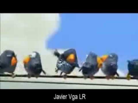 VIDEO CHISTOSO PARA whatsapp _ javier vga LR