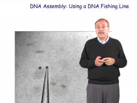 Carlos Bustamante (UC Berkeley/HHMI): Biochemistry in Singulo: When Less Means More (Spanish)