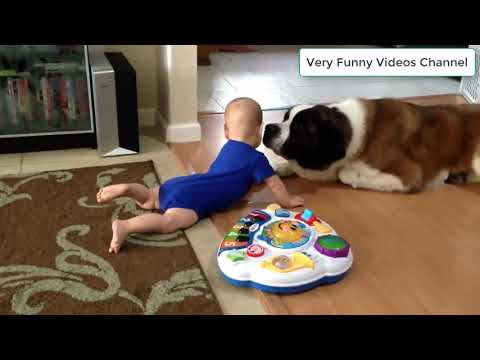 Babies Playing With Cats  and Dogs- Funny Babies Compilation