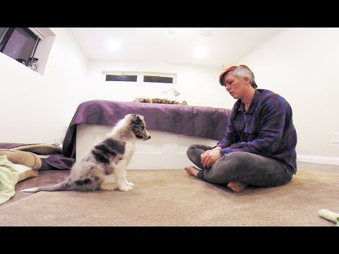 Trick to solve puppy barking, whining and frustration when training - puppy dog training
