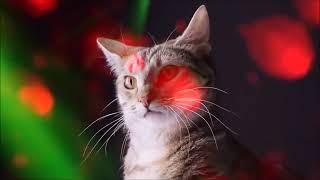 Коты поют (мяу мяу мяу)