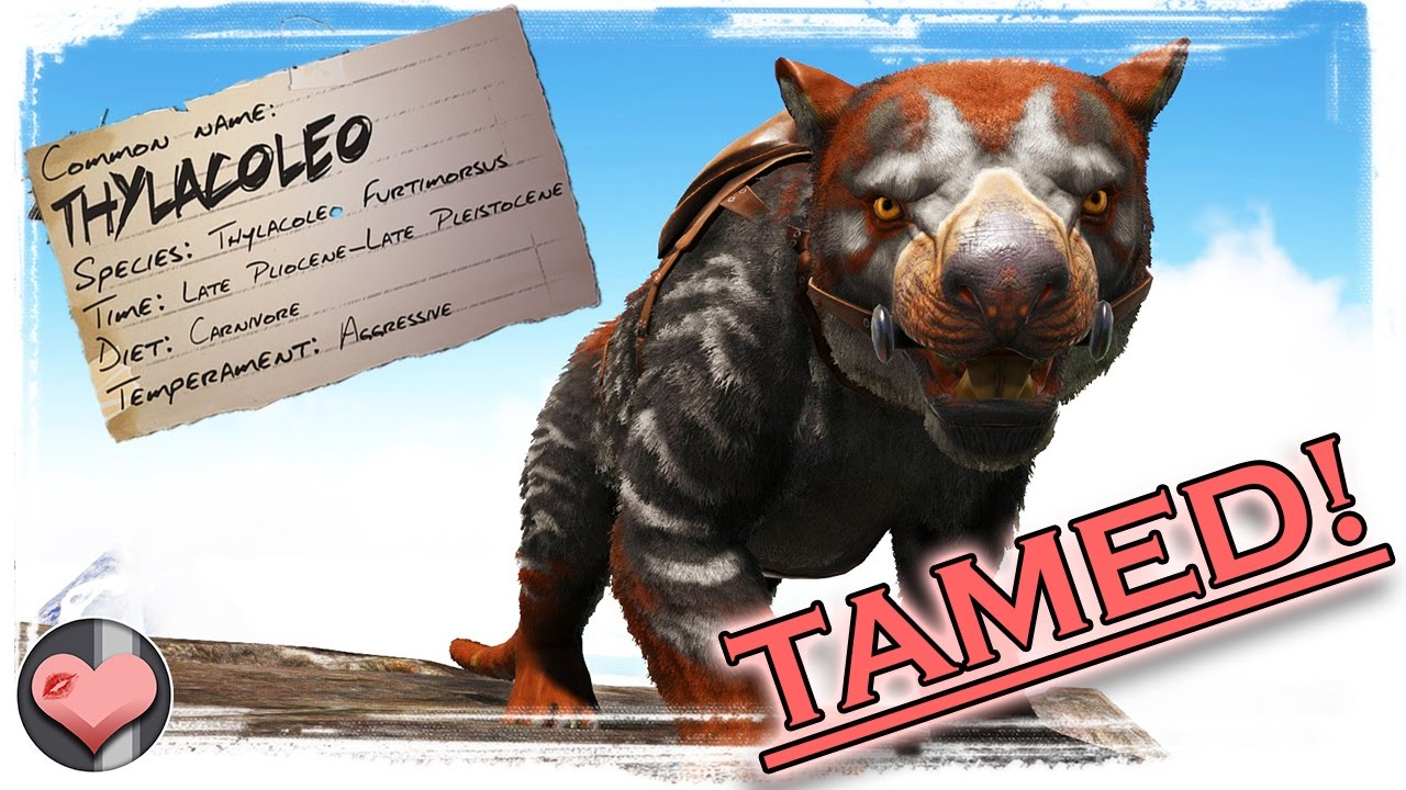 Thylacoleo Tame Ark Survival Evolved Patch 255 Youtube