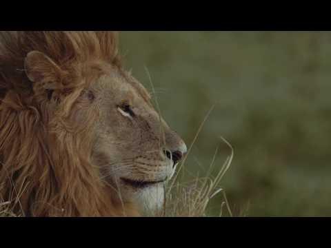 Tangulia Mara Camp, Masai Mara