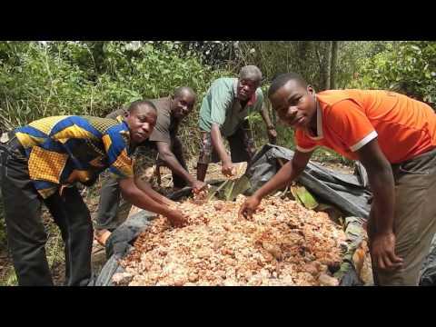 ETHIQUABLE en Cote d'Ivoire : le cacao bio et commerce équitable