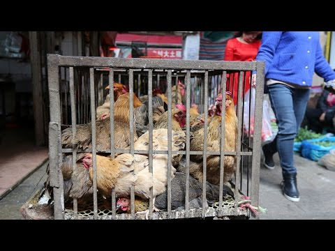 2 more human H7N9 avian cases reported in SW China