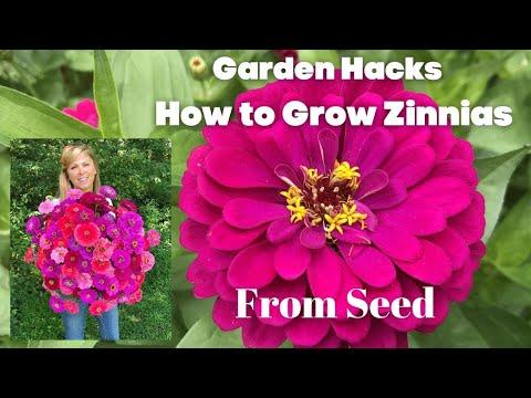 Garden Hacks | How to Grow Zinnias From Seed