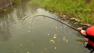 Download Рыба рядом, даже браки не могут ее выбить) Mp3 and Videos