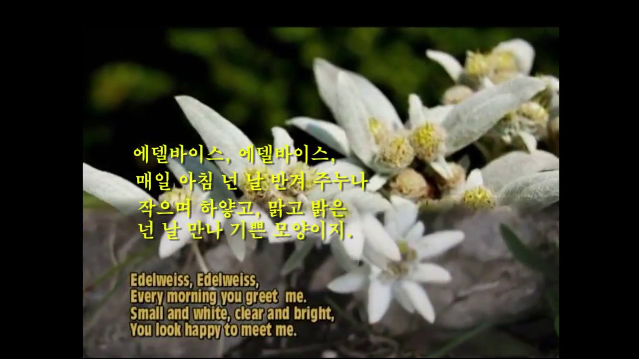Edelweiss lawrence welk his orchestra edelweiss lawrence welk his orchestra english korean captions m4hsunfo