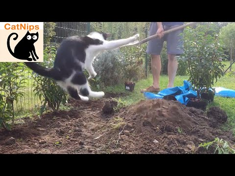 Energetic Cat Helps Out With Gardening   CatNips