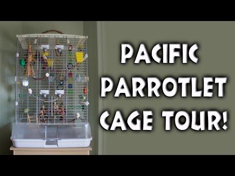 BeakertheParrotlet: Pacific Parrotlet Cage Tour | Hagen Vision Cage