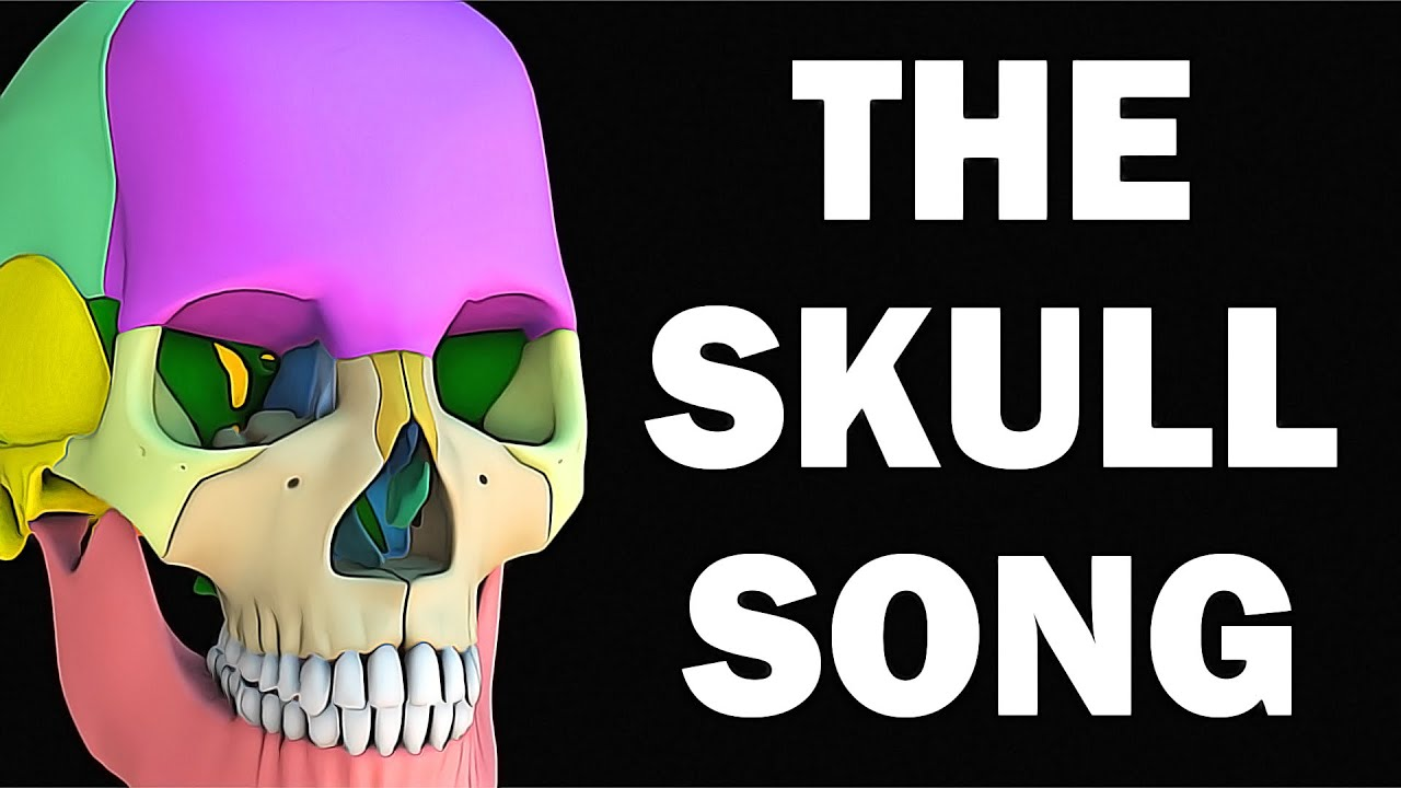 Download THE SKULL ANATOMY SONG