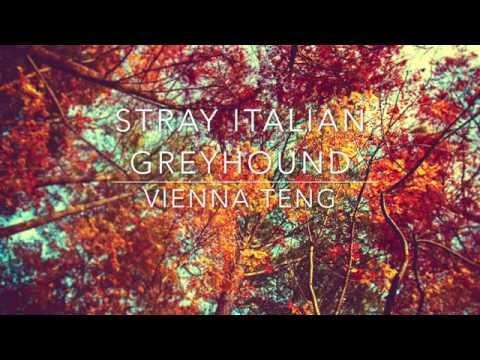 stray italian greyhound - vienna teng // lyrics