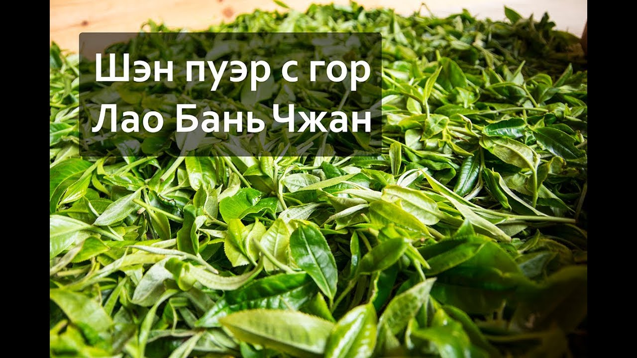 Заказать и купить чай пуэр вы можете в нашем интернет-магазине чая. Широкий ассортимент чая и аксессуаров. Доставка по всей россии. Подробности на сайте.
