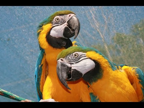 Top 10 Beautiful Parrots In The World