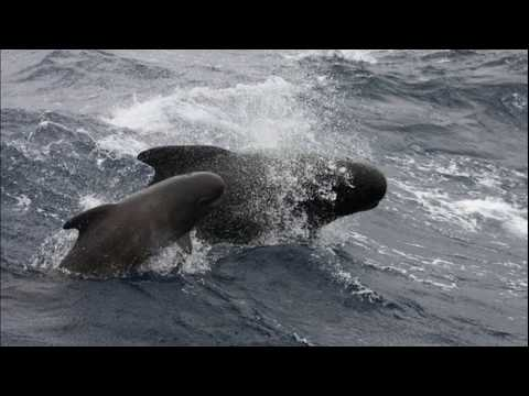 Facts: The Pilot Whale
