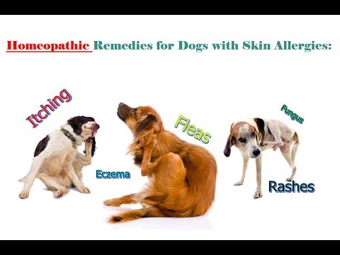 Homeopathic Remedies for Dogs Skin Allergies: Itching, Fleas & Rashes