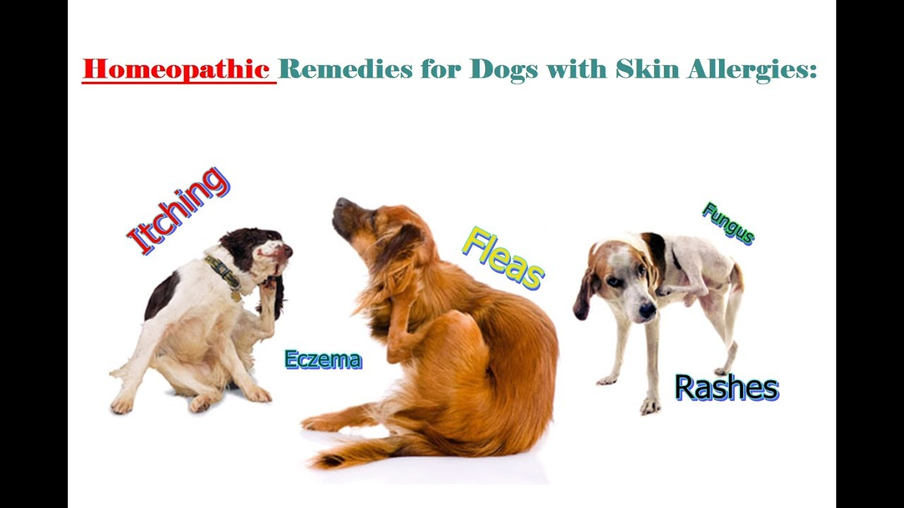 homeopathic remedies for dog allergies