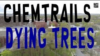 Chemtrails Close Look at the trees dead and dying in Halifax
