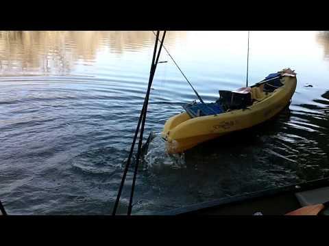 Catfishing on the Middle Brazos with Shane Davies (Yaknyota)
