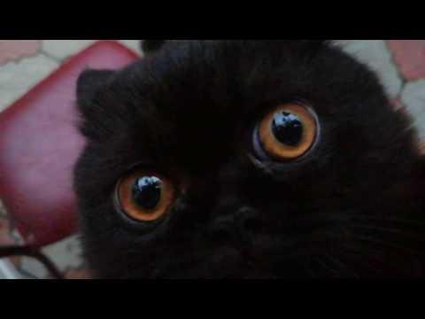Вопрос: Как научить кошку быть смелее?