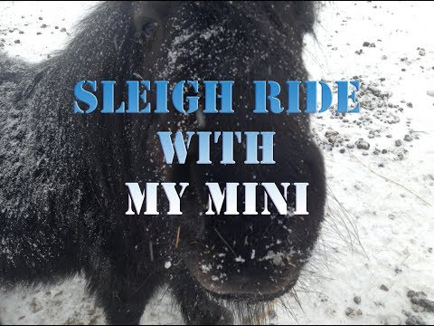 winter fun (mini pony sleigh ride and whip duel on the hay bales)