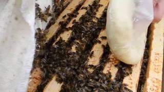 как сделать канди для пчел видео. Зимняя подкормка пчел