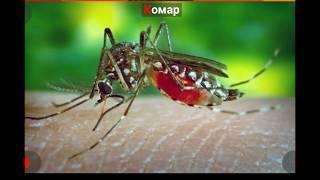 Названия насекомых для детей.  Насекомые.  Учим насекомых.