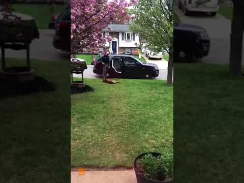 Police Dog Refuses to Go to Work, Won't Get in the Car