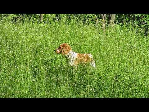 Как классно прыгать по траве!