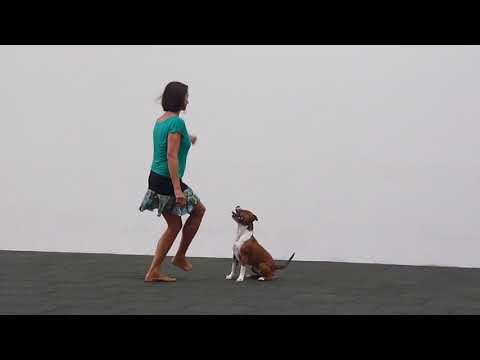 DwD1 (Dance with Dog) Wizard Funny Macy Gray (dogdancing)