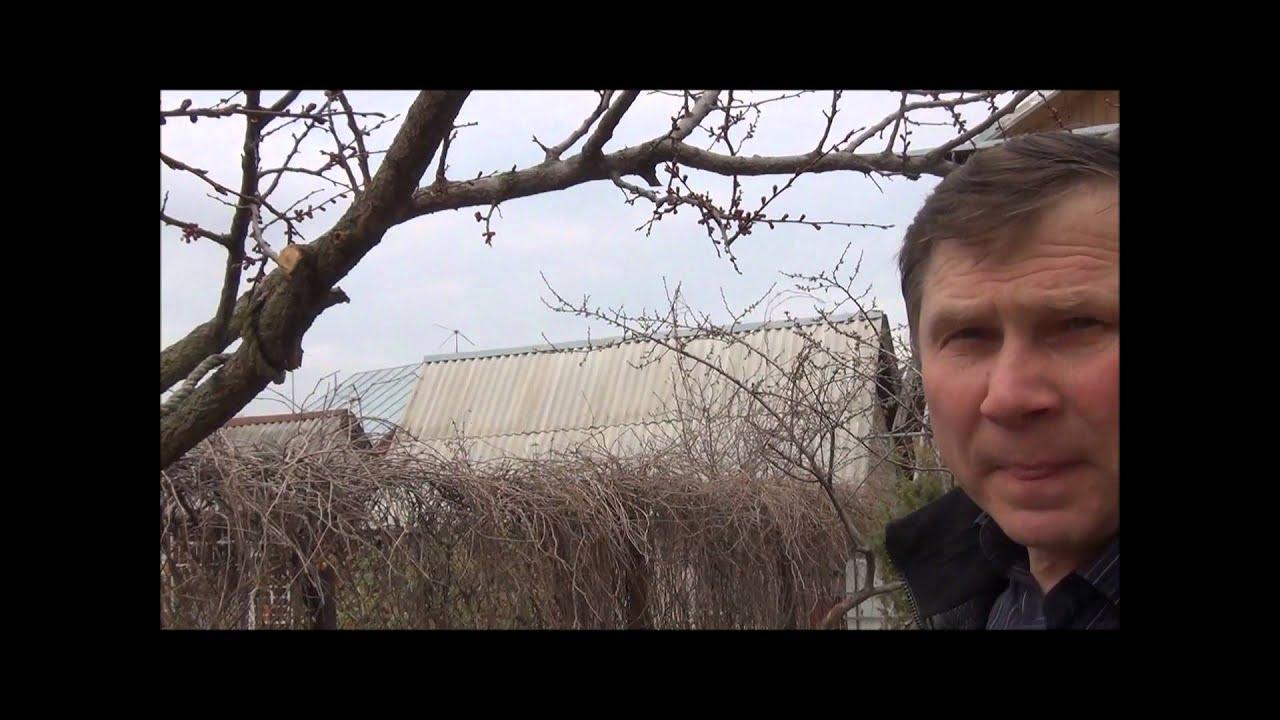 Обрезка плодовых деревьев + отвечаем на вопросы зрителей