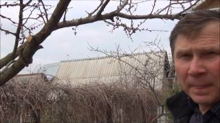 Обрезка плодовых деревьев + отвечаем на вопросы зрителей(Всем привет! В этом видео мы покажем, как обрезать плодовые деревья, сформировать крону, а так же ответим..., 2013-05-05T17:38:39.000Z)