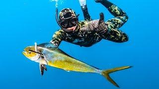 Baixar Bluewater SPEARFISHING Mahi Mahi! - Tusk Fish Catch n Cook