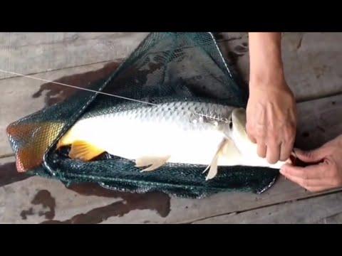 Fishing - Carp Fishing - New Bait - Câu Cá Chép Mồi Mới Cực nhậy