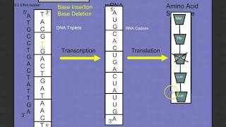 Introduction to Protein Synthesis