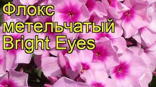 Флокс метельчатый Яркие глаза. Краткий обзор, описание характеристик, где купить рассада