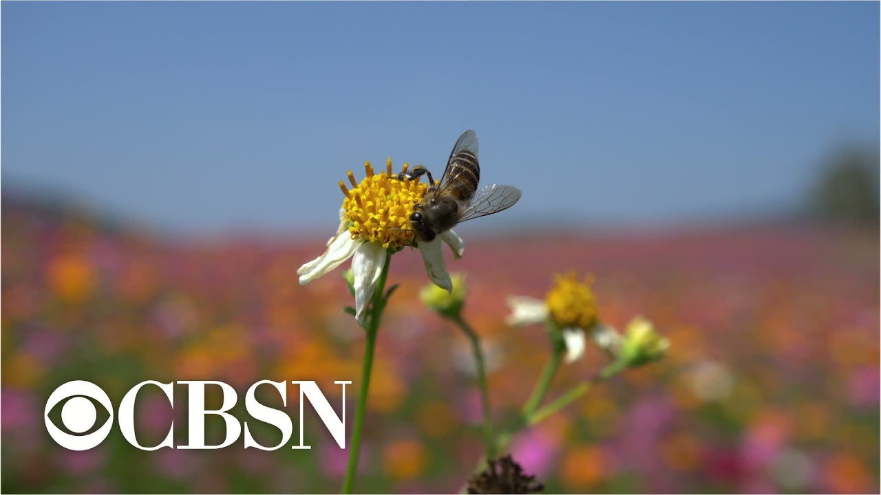 Roundup weed killer may play role in widespread bee deaths