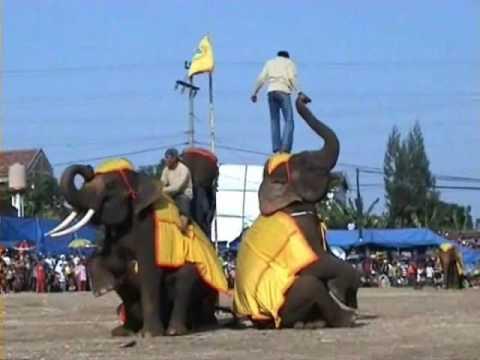 Funny Indonesian Elephant Circus