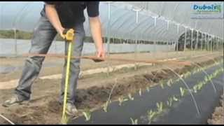 Low Tunnel Installation with Mechanical Transplanter | Dubois Agrinovation