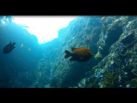 Shaw's Cove In Laguna Beach Scuba Dive – GoPro Dive Housing