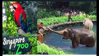 Singapore World The Best Rainforest Zoo Сингапурский Зоопарк
